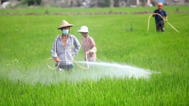 农业资讯平台网站建设方案书